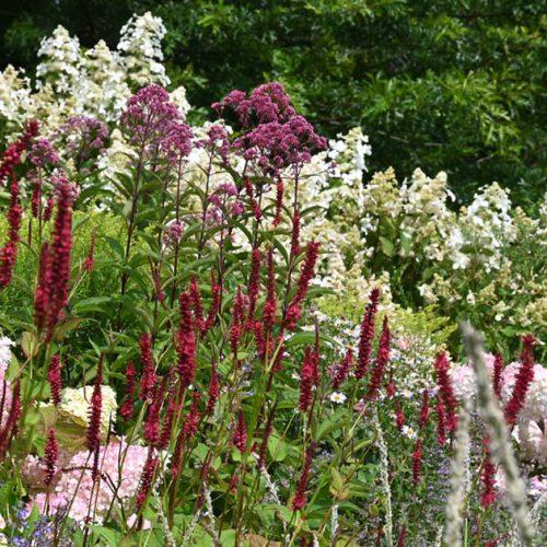 tuinen voor de toekomst bps tuinen