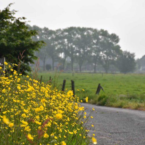 ecologische aanpak bps tuinen