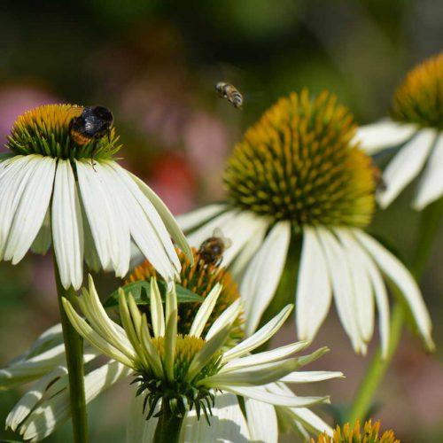 biodiversiteit bps tuinen