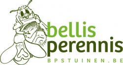 logo bellis perennis